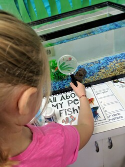 kindergarten student looking at fish tank